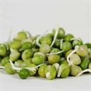 Vatana Sprout