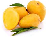 Mango Alphonso (Haapus)
