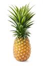 Pineapple