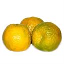 Orange Nagpur